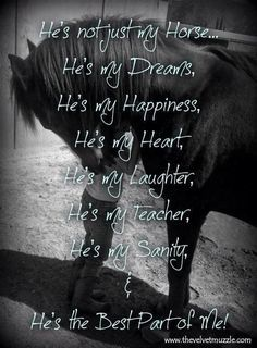 "I can't live without my horse; I never grew out of the ""I Love Horses So Freaking Much"" Stage, evidently. Equine Quotes, Equestrian Quotes, Equestrian Problems, My Horse, Horse Girl, Horse Tack, Pretty Horses, Beautiful Horses, Inspirational Horse Quotes"