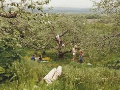 Image result for justine kurland photography
