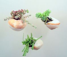 Hanging Shell with Succulent Plants  DIY by FlathersCreations, $11.00