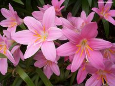 flores-de-primavera-imagenes-19631.jpeg
