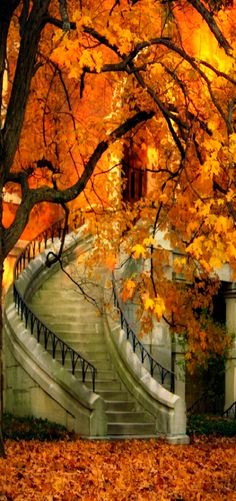 ~ Fall ~ Spectacular stairway - would be fun to see it in the different seasons.