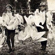 """""""Husa je jídlem sezónním od jara do Vánoc, s počátku ovšem jen jako lahůdka pro mlsné gourmandy, až teprve na podzim zpopulární. V nastalých chladnějších dnech lze husu lépe vykrmili a získati tučnější pečínku. Proto nyní, a pak dále až do Vánoc bývá všude nejživější trh na husy. Posvícení není posvícením bez husy, každá rodinná význačnější událost slaví se husou, hosté jsou jí častováni a konečně každá neděle je nedělnější s husou. Protože zítra je sv. Martina, připomínám všem, že podle…"""