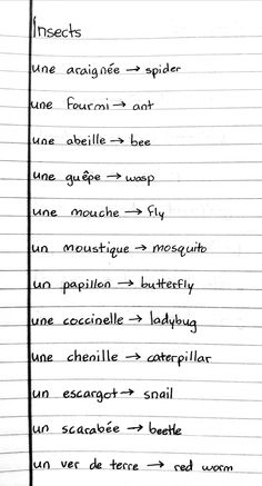 Insects Romanian Language, English Vocabulary, French Language, Languages, Insects, Learning, Travel, Romania, French Tips