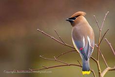 Fabulously First!: Bird Watching Hobby