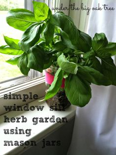 simple window sill herb garden