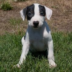 I want this puppy!!