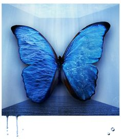 Blue Butterfly by ~M0rtishA on deviantART #ndsufinearts