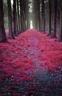 Beautiful scenery...i want to walk thru there