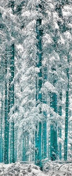❖ White Forest