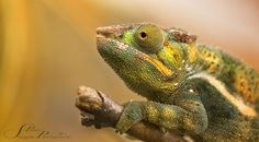camouflage is all by Sonja Probst on 500px