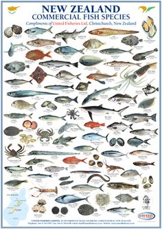 Types of fish chart – A Selection of Pins about Animals Fish Chart, Fauna Marina, Saltwater Fishing, Kayak Fishing, Fishing Tips, Tuna Fishing, Fishing Videos, Salmon Fishing, Salt Water Fish