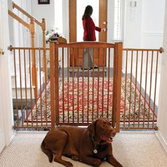 Richell Tall One-Touch Pet Gate 150 at PETCO