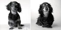 lili-8meses e 15 anos Como os cães envelhecem? Um projeto fotográfico curioso e comovente