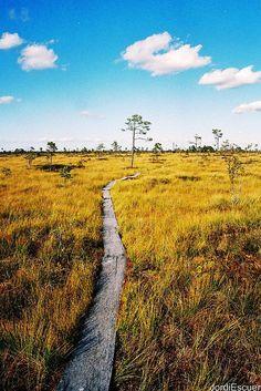 # COLURFULESTONIA Soomaa Rahvuspark, Estonia.  September, 2005. #COLOURFULESTONIA #VISITESTONIA