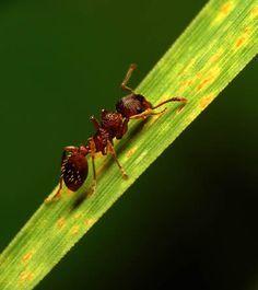 DUTCH... Mieren bestrijden mieren verdelgen in tuin en huis het ongedierte doden; bestrijding mier