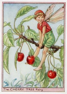 Cherry Tree Flower Fairy Vintage Print, c.1950 Cicely Mary Barker Book Plate Illustration via Etsy