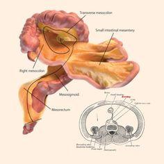 Se você acha que após centenas de anos de estudo nós já conhecemos tudo sobre o corpo humano, então você está errado. Uma descoberta incrível mostrou que ainda não sabemos tudo sobre nós mesmos.