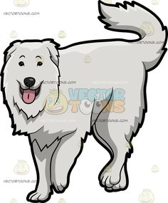 A Lovely Great Pyrenees Dog :  A dog with white coat droopy ears thick tail walks forward while parting its lips to reveal a pink tongue  The post A Lovely Great Pyrenees Dog appeared first on VectorToons.com.   #clipart #vector #cartoon