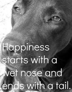 I'll bet everyone seeing this picture would agree.  #dogs