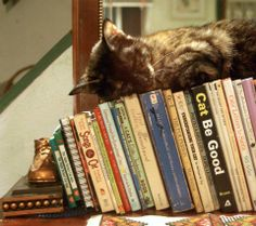If you sleep on books, you automatically absorb what's in them, right?