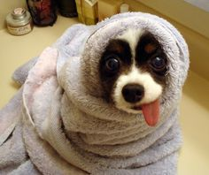 10 Cutest Dogs:  Number 5: Dog Impression of E.T