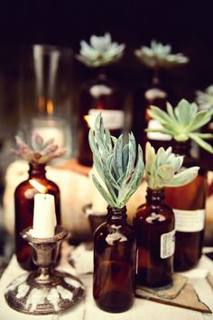 Bottles and succulents #Coastal #Design via ruffledblog.com