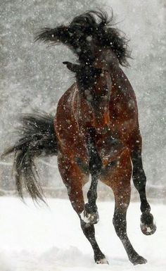 Frolic in the snow