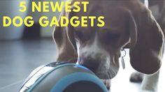 New Cool Dog Gadgets