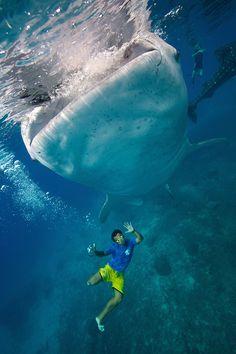 Oslob fishermen & Whale Shark