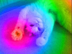 This cat has been watching nyan cat for to long