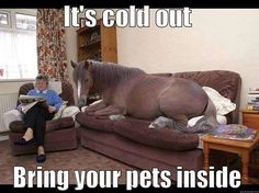 It's cold outside - Bring your pets inside funny animals winter awareness cold pets horse