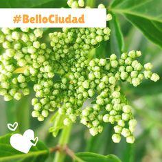BelloCiudad #NestorLeon Bellisima, Fruit, Food, Cities, Essen, Meals, Yemek, Eten