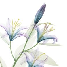 x-ray flower--love the x-ray pictures