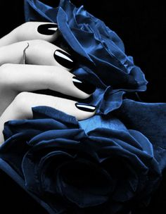 Gorgeous contrast of black nails against blue! Color Splash, Color Pop, Color Blue, Blue Roses, Love Blue, Vaporwave, Ciel, Belle Photo, Midnight Blue