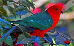 Beautiful Bird - Birds & Animals Background Wallpapers on Desktop ...