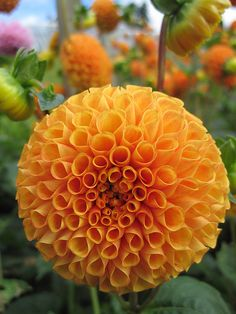 A Perfect Round Flower,  by John Hackston