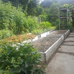 This highly productive city farm is widely considered a successful one-of-a-kind model for sustainable agriculture and eco living in urban areas.
