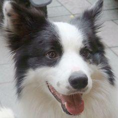 #taiwan  #dog