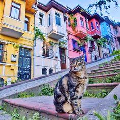 ISTANBUL, Turkey. Thanks to Ahmet ERDEM @ahmet.erdem for sharing this lovely Istanbul photo! Instagram photos! | Teşekkürler Ahmet Erdem bu güzel Istanbul karesini bizimle paylaştığın için...| www.armadaistanbul.com #istanbul #oldcity #armadahotel #armadaotel #turkey