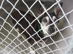 Daisy: With no interest, elderly dog in California scheduled to be destroyed on Sunday