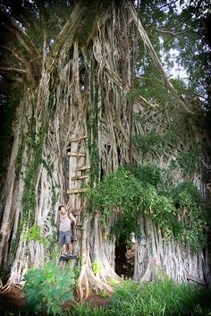 Banyan Tree, Paia | Flickr - Photo Sharing!