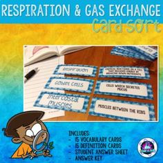 Perfect for revision! Here's a set of FREE 30 Vocabulary Cards on Respiration & Gas Exchange about: Aerobic respiration, anaerobic respiration, and the human gas exchange system. This product is part of a larger Respiration & Gas Exchange Bundle. Secondary Resources, Science Resources, Science Lessons, Life Science, Teaching Resources, Secondary Math, Teaching Ideas, Middle School Teachers, Middle School Science