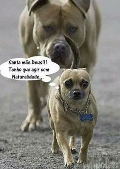 , Funny Dog Pictures No Words . Funny Dog Pictures , funny dog pictures no words - funny dog pictures . funny dog pictures with captions . funny dog p. Funny Dog Captions, Funny Animals With Captions, Funny Animal Quotes, Funny Dog Memes, Funny Pictures With Captions, Cute Animal Pictures, Funny Images, Funny Dogs, Animal Humor