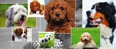 Adopting A Puppy Adoption, Puppies, Pets, Animals, Foster Care Adoption, Cubs, Animales, Animaux, Animal