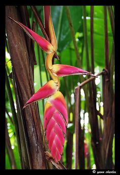 Faune & Flore de Martinique // Fauna & Flora from Martinique  by Yann Charles, via Flickr