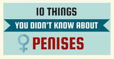 10 Things You Didn't Know About Penises | IFLScience