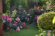 ogród różany - Szukaj w Google