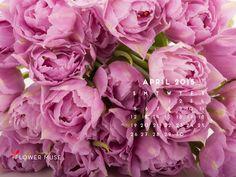 Desktop Calendar April 2016 november 2016 calendar - download for free on flower muse blog