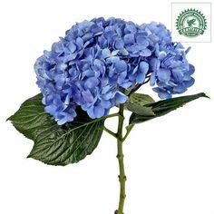 Shocking Blue Hydrangeas - 36 Stems