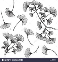 Collection of ginkgo leaves drawing and sketch with line-art. Jungle Flowers, Line Art Images, Motif Vintage, Plant Tattoo, Nature Sketch, Leaf Drawing, Tangle Art, Leaf Flowers, Gourd Art